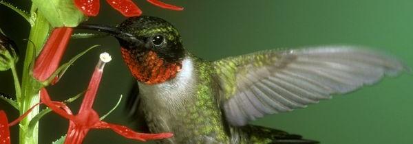 Ant Free Hummingbird Feeders