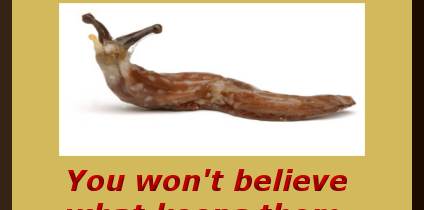 Natural Slug Killer