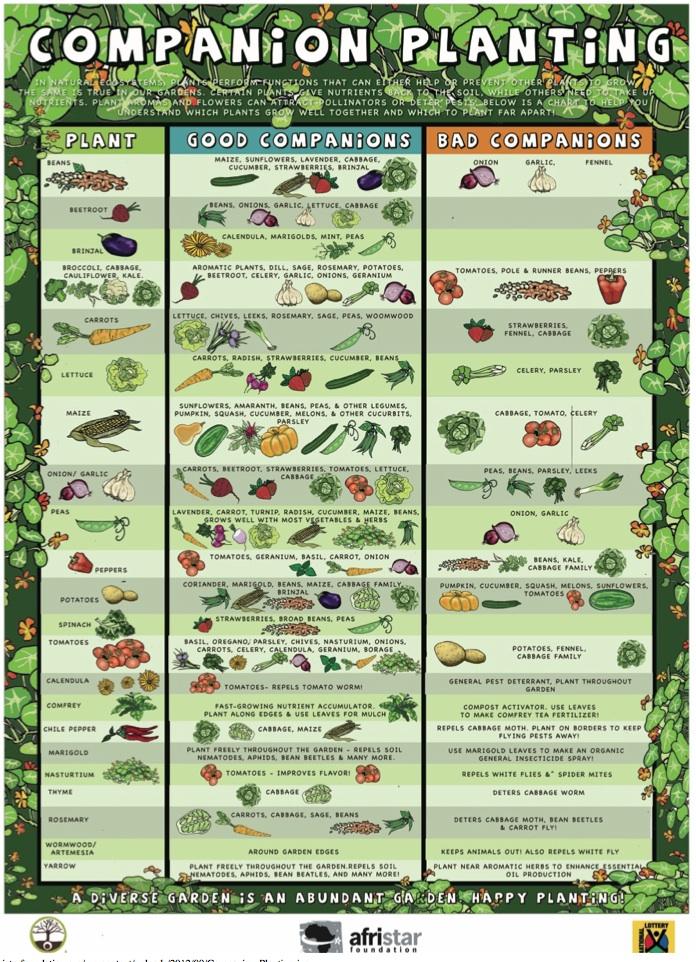Garden Companion Chart