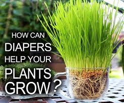 Using Diapers For Seed Starting