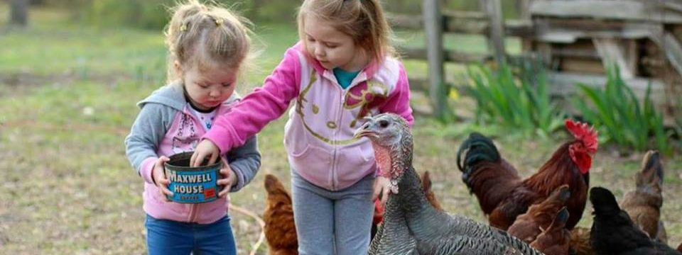 Grands Feeding Chickens