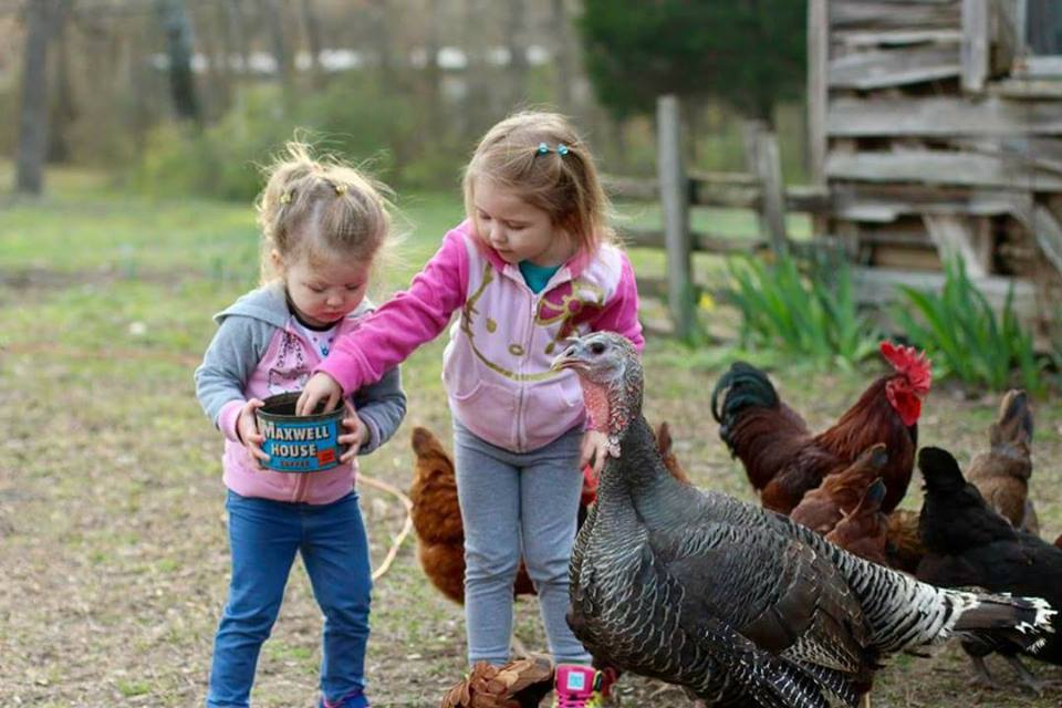 Grands Feeding Chickens