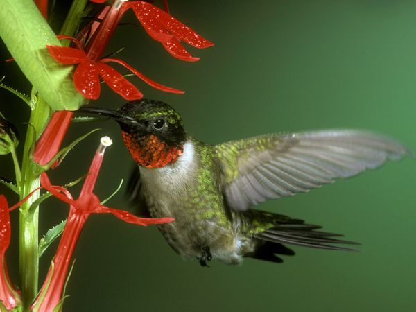 Ant Free Hummingbird Feeders