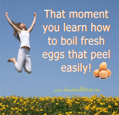 Boil Fresh Eggs
